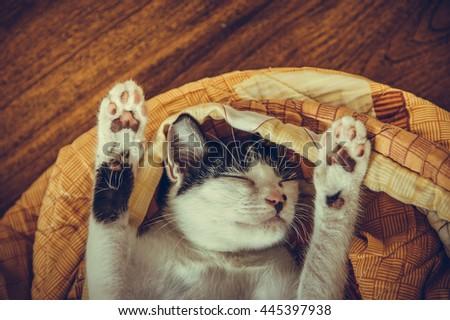 cat sleeping in the blanket - stock photo