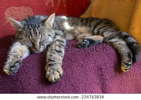 cat sleeping on a blanket - stock photo