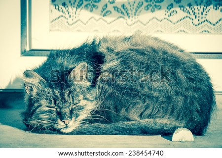 Cat sleeping on a windowsill of an old rural house with lace curtain decorating the window. Aged photo. - stock photo