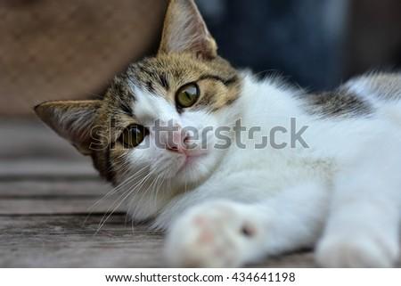 Cat sleeping on a wooden floor - stock photo