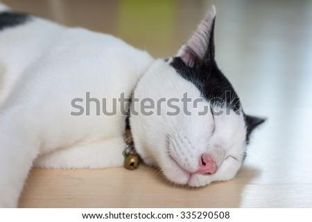 cat sleeping on floor - stock photo