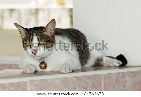 Cat sleeping on front house and face of cat