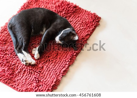 cat sleeping on red carpet, copy space. - stock photo