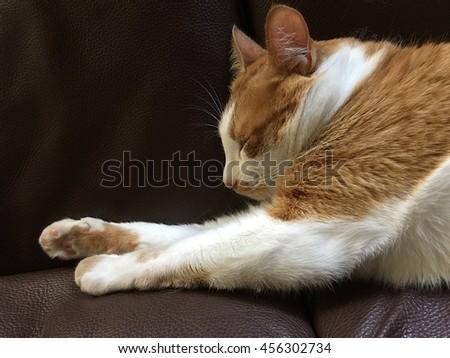 Cat sleeping on sofa - stock photo