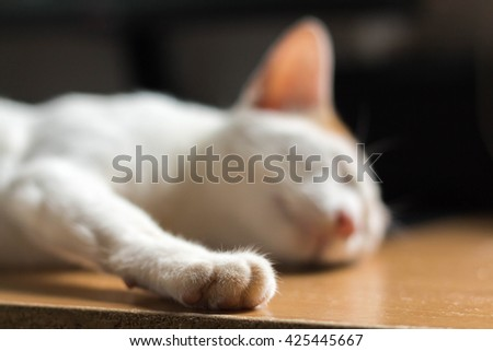 cat sleeping on table