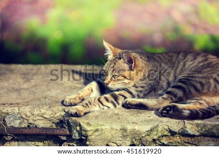 Cat sleeping on the concrete block