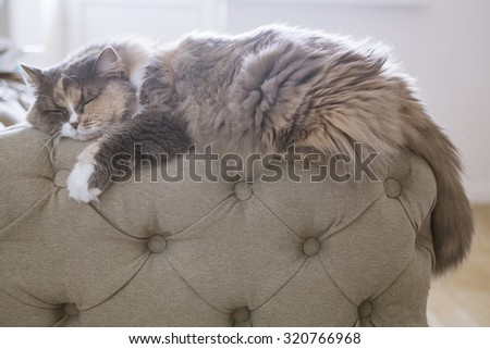 cat sleeping on the couch - stock photo