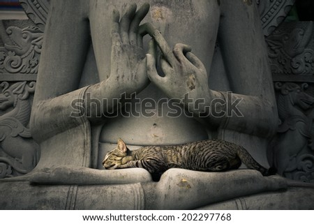 Cat sleeping on the lap Buddha statues. - stock photo