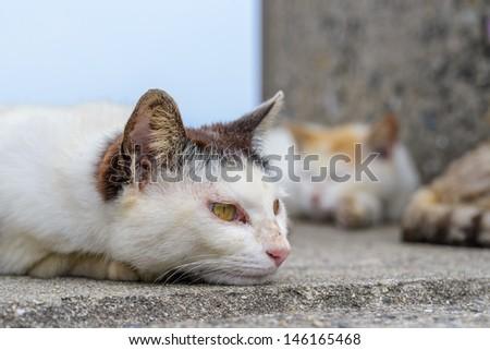 cat sleeping on the street.  - stock photo