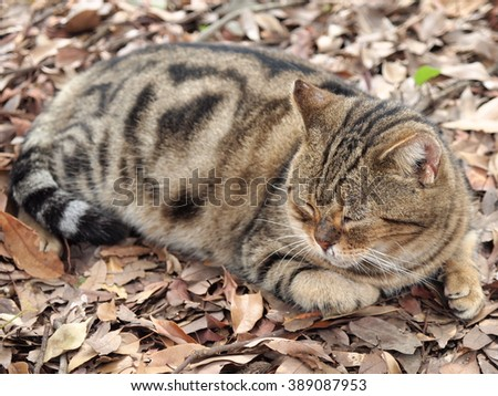 Cat sleeping on top of the fallen leaves