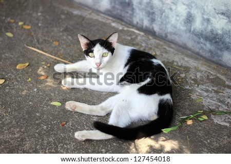Cat sleeping sand cement floor - stock photo