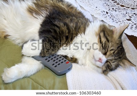 Cat sleeping with a television remote control in between his paws.