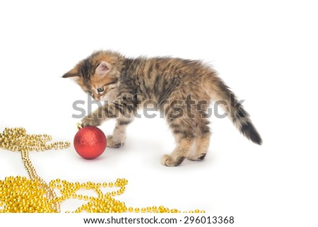 cat, small, Christmas, New Year, Christmas decorations, gift - stock photo