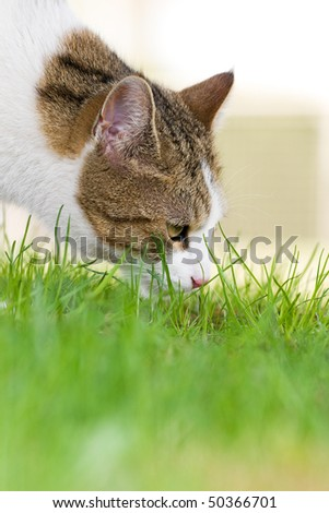 cat smells in the grass - stock photo