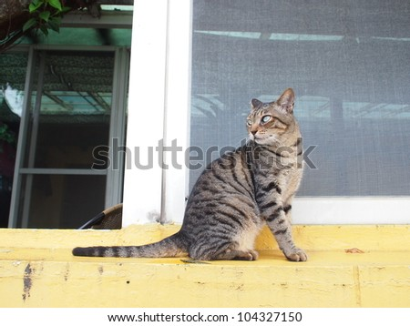 cat stand - stock photo