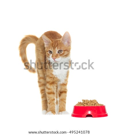 Cat standing on a white background isolated