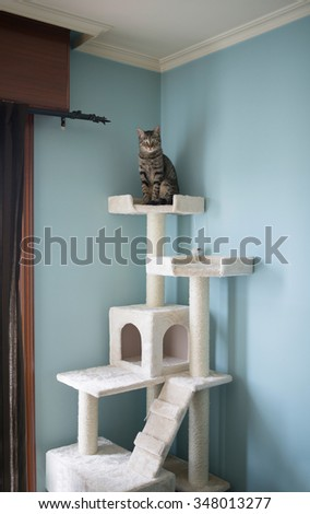 Cat standing on the top of a toy for cats at home