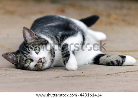 Cat stare - stock photo