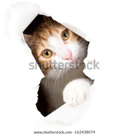 Cat stares through a hole in paper - stock photo