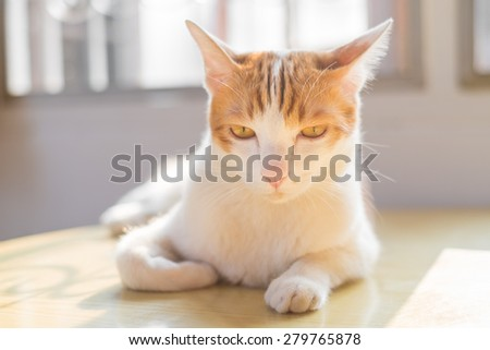 cat staring - stock photo