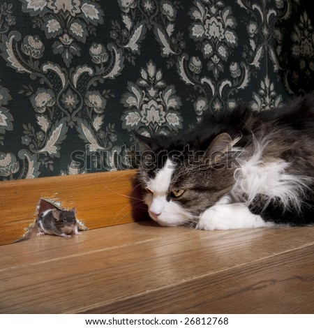 Cat staring at a mouse coming out of her hole - stock photo