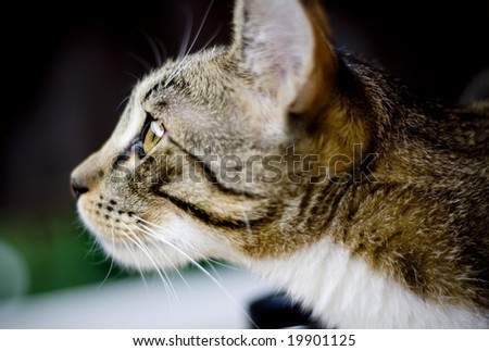 cat staring at something - stock photo