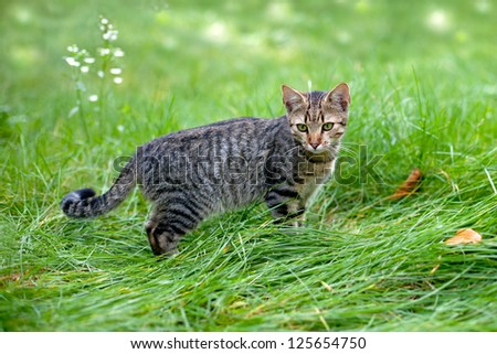 Cat  staying in a tall grass - stock photo