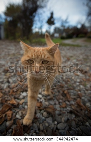 cat straying on front yard - stock photo