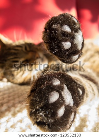 Cat stretching her paws - stock photo