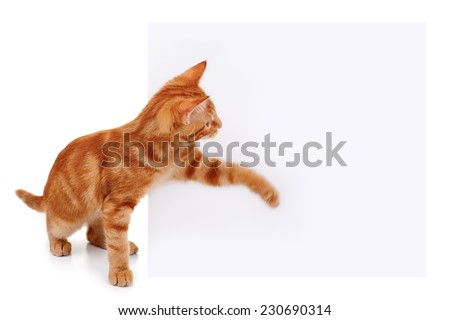 Cat swatting at empty space on sign for your copy text. Motion blur on cats paw to show action - stock photo