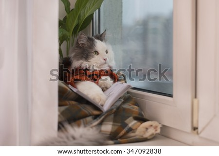cat sweater, reading a book while sitting at a window - stock photo