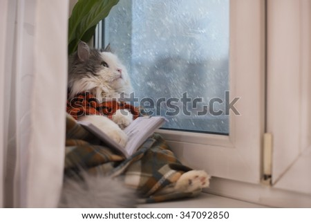 cat sweater, reading a book while sitting at a window