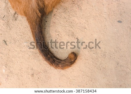 cat tail Siamese Cat(selective focus) - stock photo
