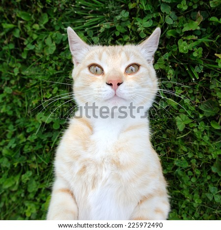 Cat Taking Selfie - stock photo