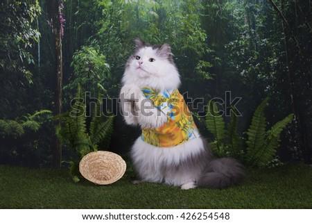 cat-traveler in the rainforest - stock photo