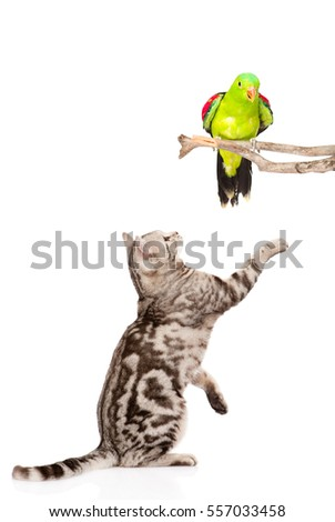 Cat trying to catch a bird.  isolated on white background