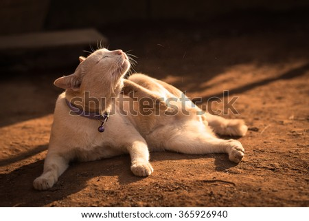 Cat uses its Leg Scratching at Chin - stock photo