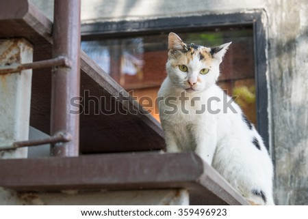 cat vagrant on stairs