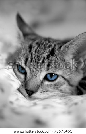 Cat very bored on a bed - stock photo