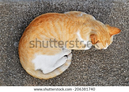 Cat - view from above - stock photo