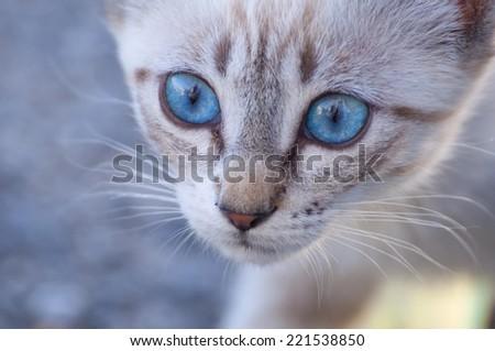 Cat walk - stock photo
