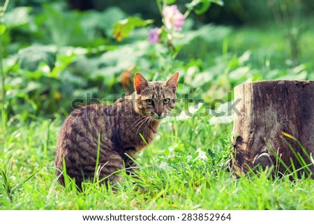 Cat walking in a tall grass - stock photo