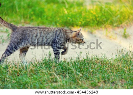 Cat  walking on dirt road in the yard