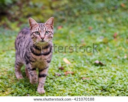 Cat walking on green grass - stock photo