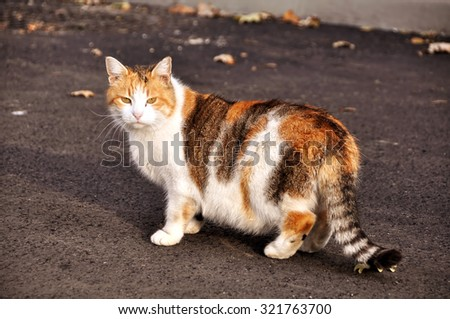 cat walking on the paved road