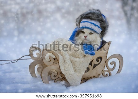 Cat walks in sledge frosty day - stock photo