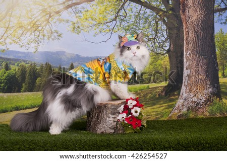 Cat walks in the forest on a warm summer day