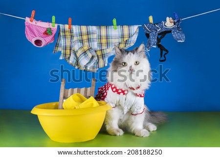 cat wash clothes in the basin - stock photo