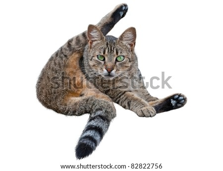 Cat washing itself on white background