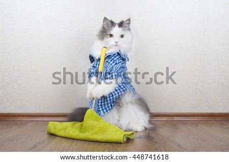 cat washing the floor in the apartment - stock photo
